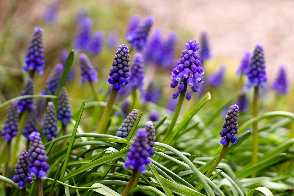 den Frühling feiern